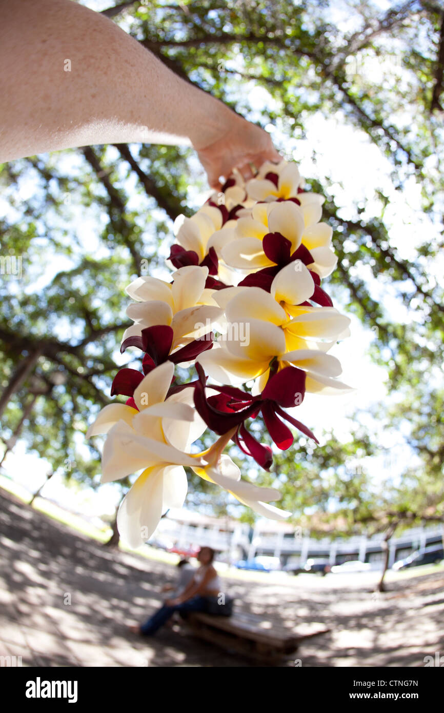 Hawaiian lei made of white and purple plumeria flowers for bride hawaiian lei made of white and purple plumeria flowers for bride izmirmasajfo