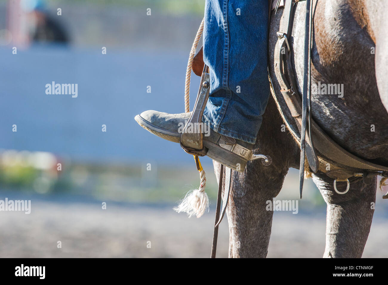 Cowboy on horse at the  Tsuu T'ina Annual Rodeo & Pow Wow - Stock Image