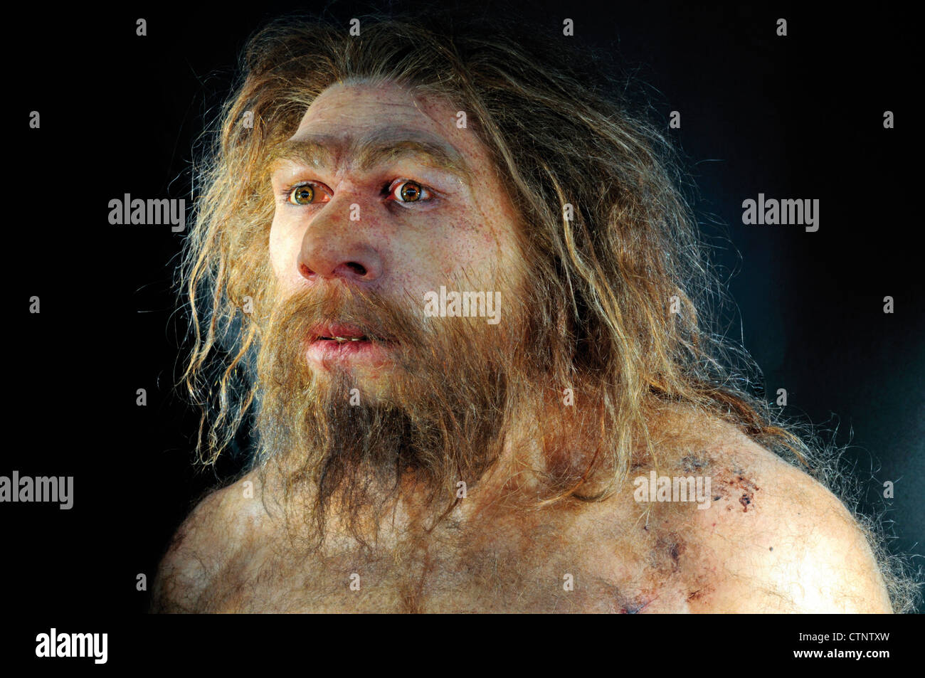 Spain, Burgos: Reproduction of a  male Homo neanderthalensis in the Museum of Human Evolution - Stock Image