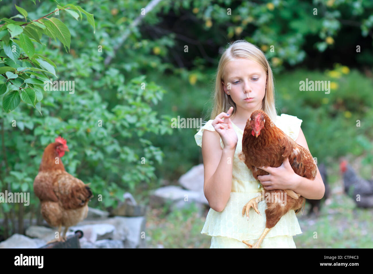 Young Blond Girl in the Garden with Chickens in a Yellow Dress - Stock Image