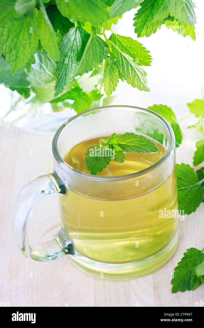Mint tea with fresh mint leaves - Stock Image