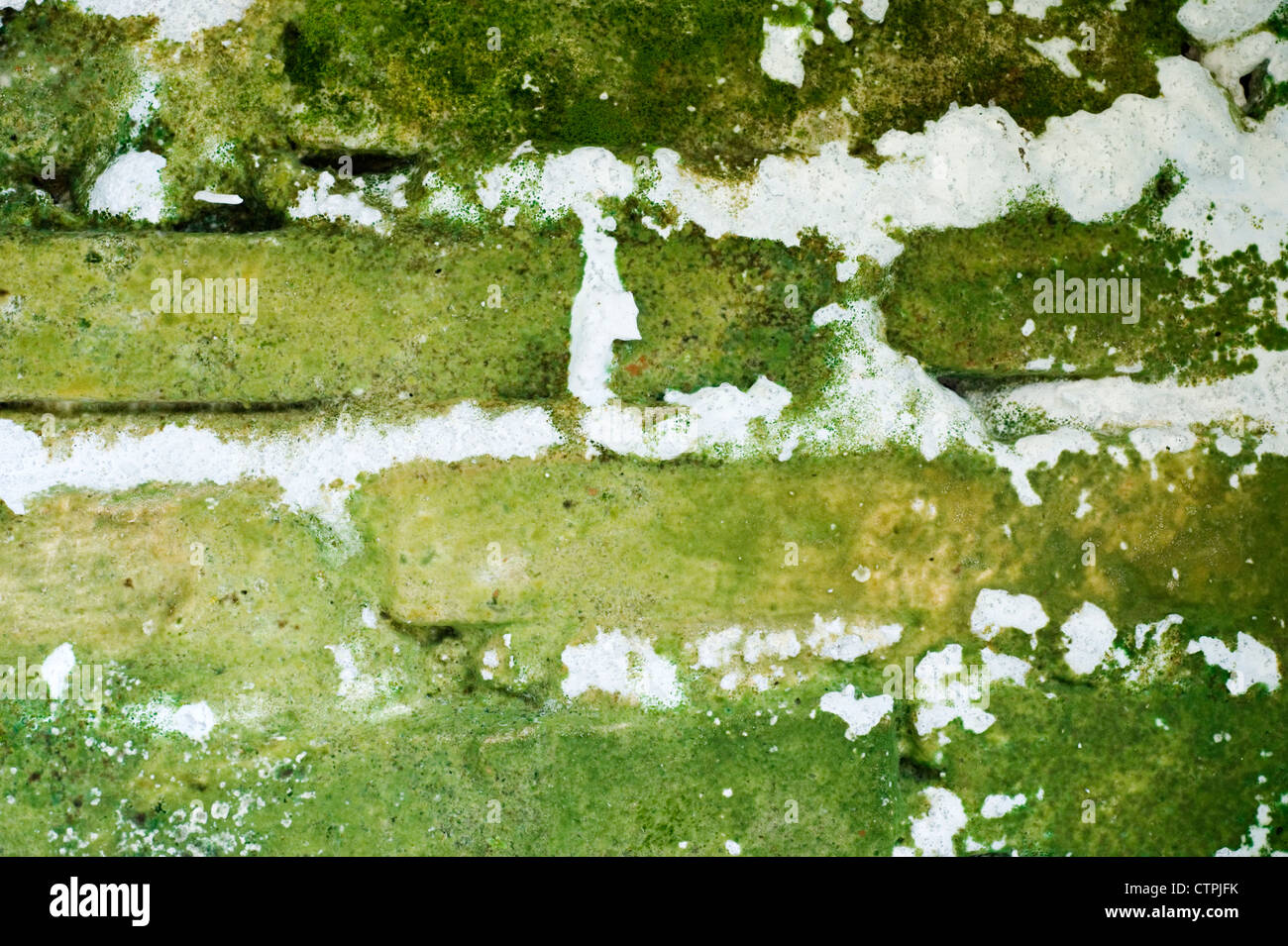 severe rising damp on a house exterior wall common sight in indonesia - Stock Image