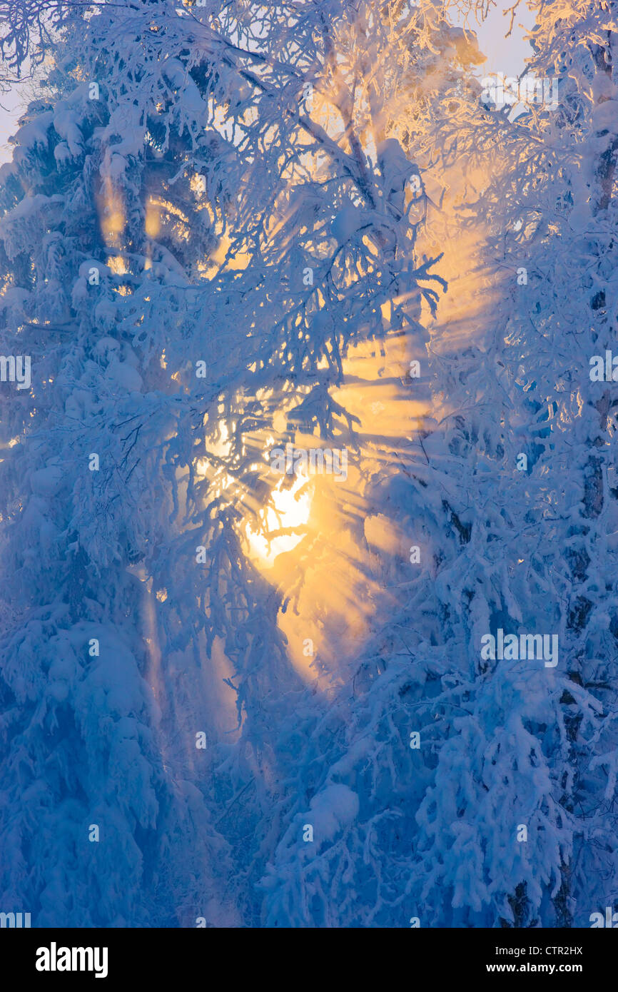 Sun filtering through fog in hoarfrost covered forest Russian Jack Springs Park Anchorage Southcentral Alaska Digitally - Stock Image