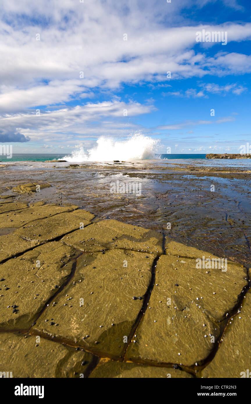 Tessalated Rocks, Royal National Park, New South Wales, Australia - Stock Image