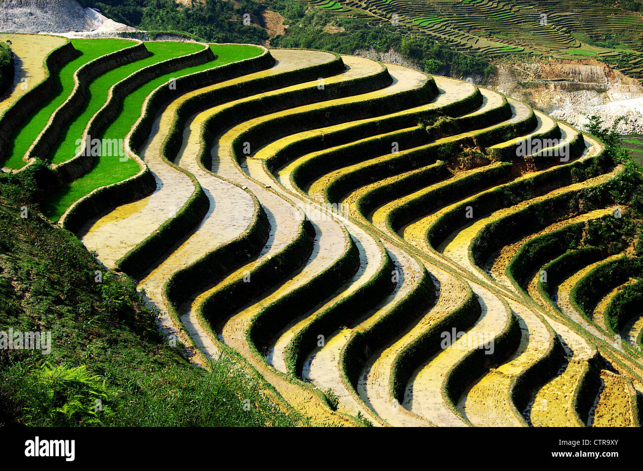 terraced fields and rice culture, Sapa, Vietnam - Stock Image