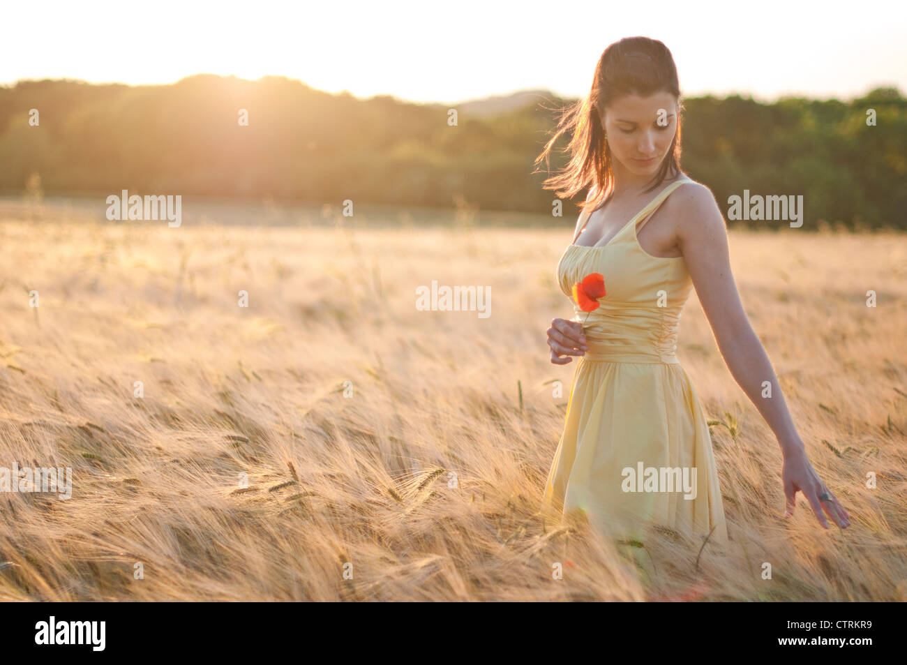 Woman walking through a wheat field, dreamily running her fingers over the wheat ears Stock Photo