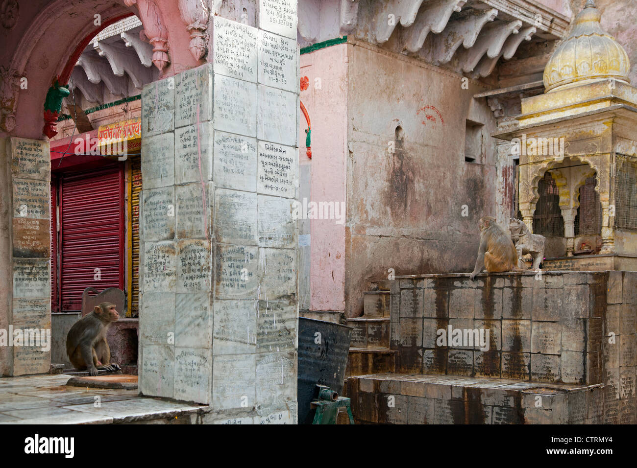 Macaque monkeys at traditional bathhouse in Mathura, Uttar Pradesh, India - Stock Image