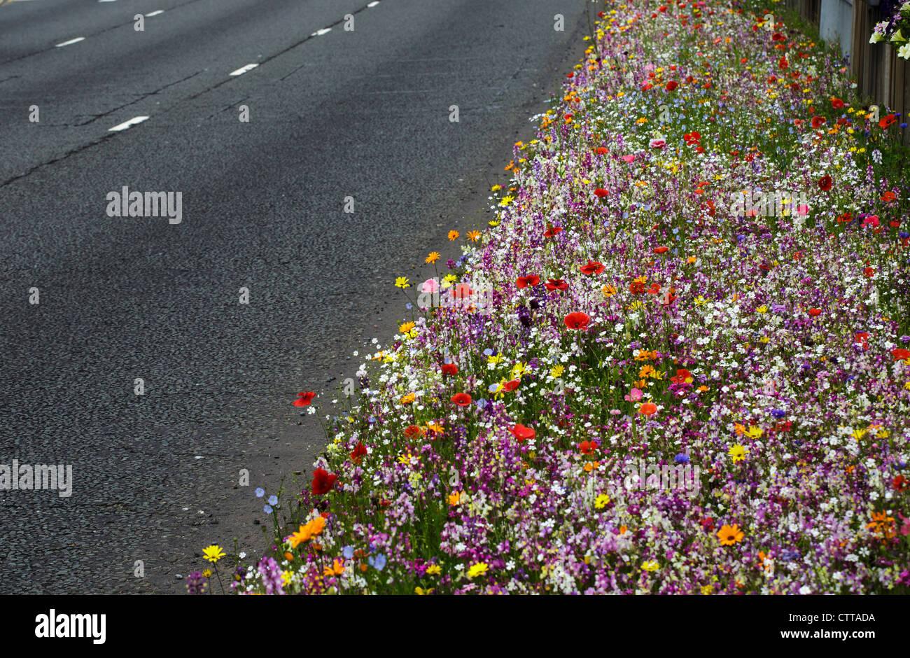 Wild flowers growing by a roadside in Birmingham, UK - Stock Image
