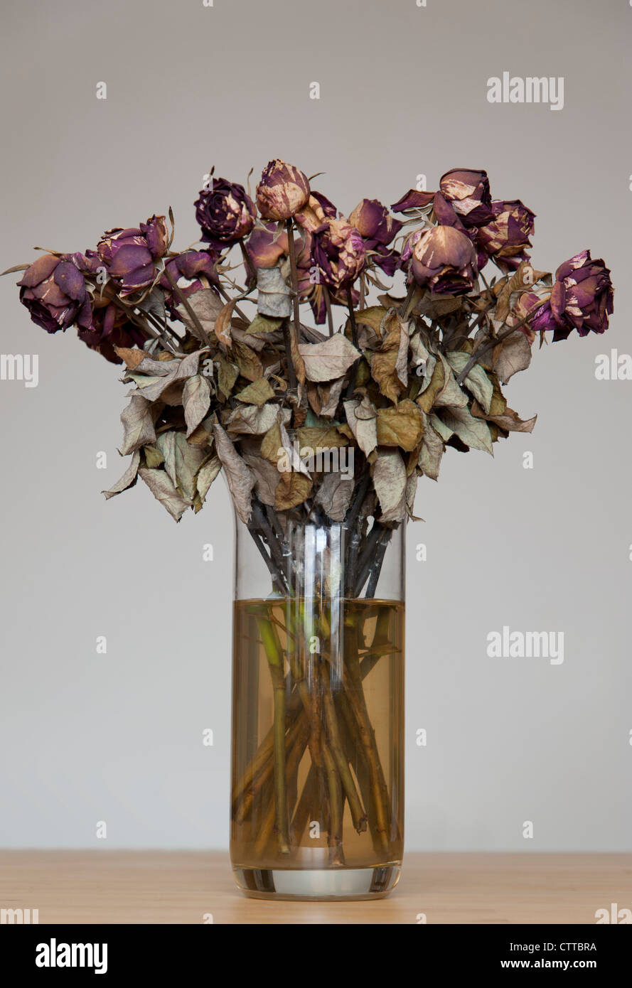 Dead Flowers Roses Stock Photos Dead Flowers Roses Stock Images