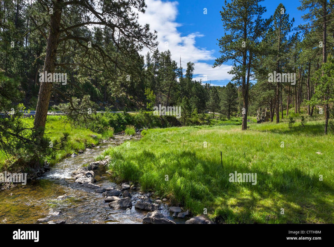 Stream at Blue Bell picnic area alongside the Route 87 in Custer State Park, Black Hills, South Dakota, USA - Stock Image