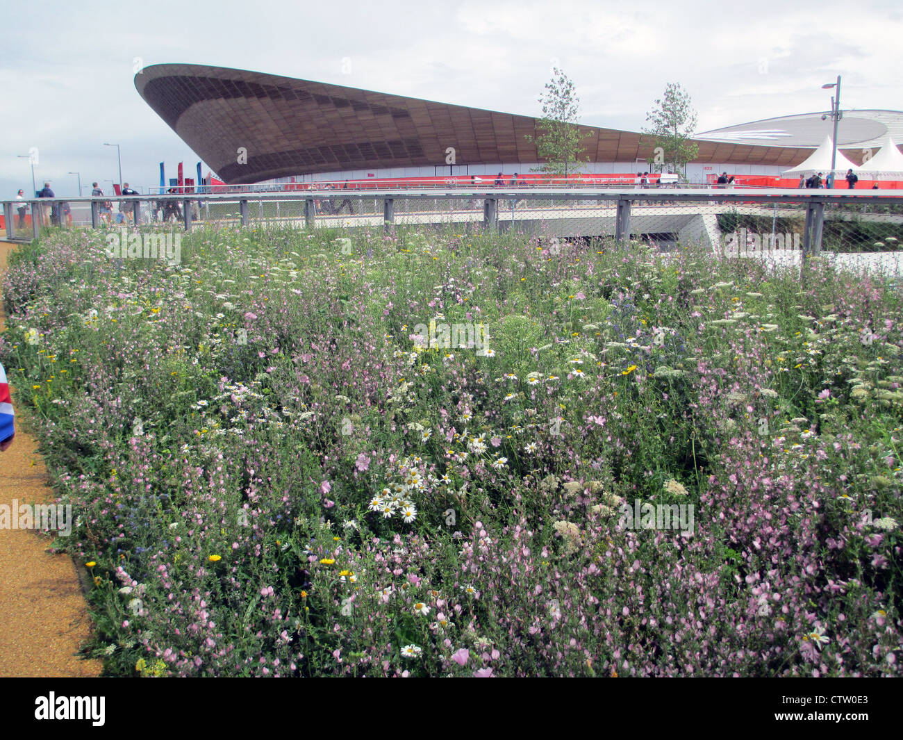WILD FLOWERS in front of the Velodrome at Olympic Park, Streatham, London in July 2012. Photo Tony Gale - Stock Image