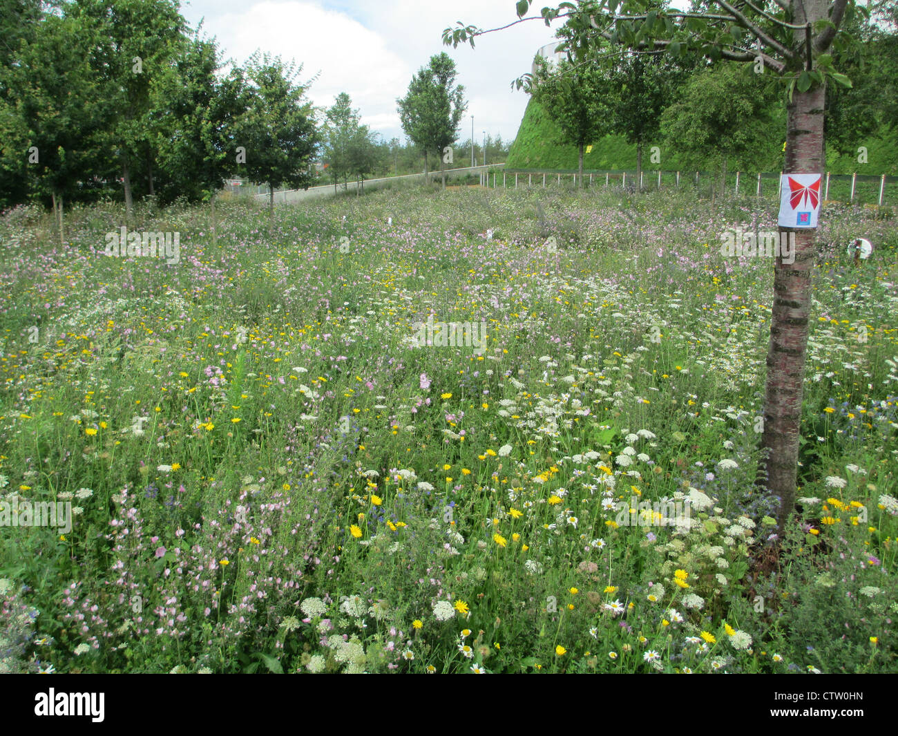 WILD FLOWERS at Olympic Park, Streatham, London in July 2012. Photo Tony Gale - Stock Image