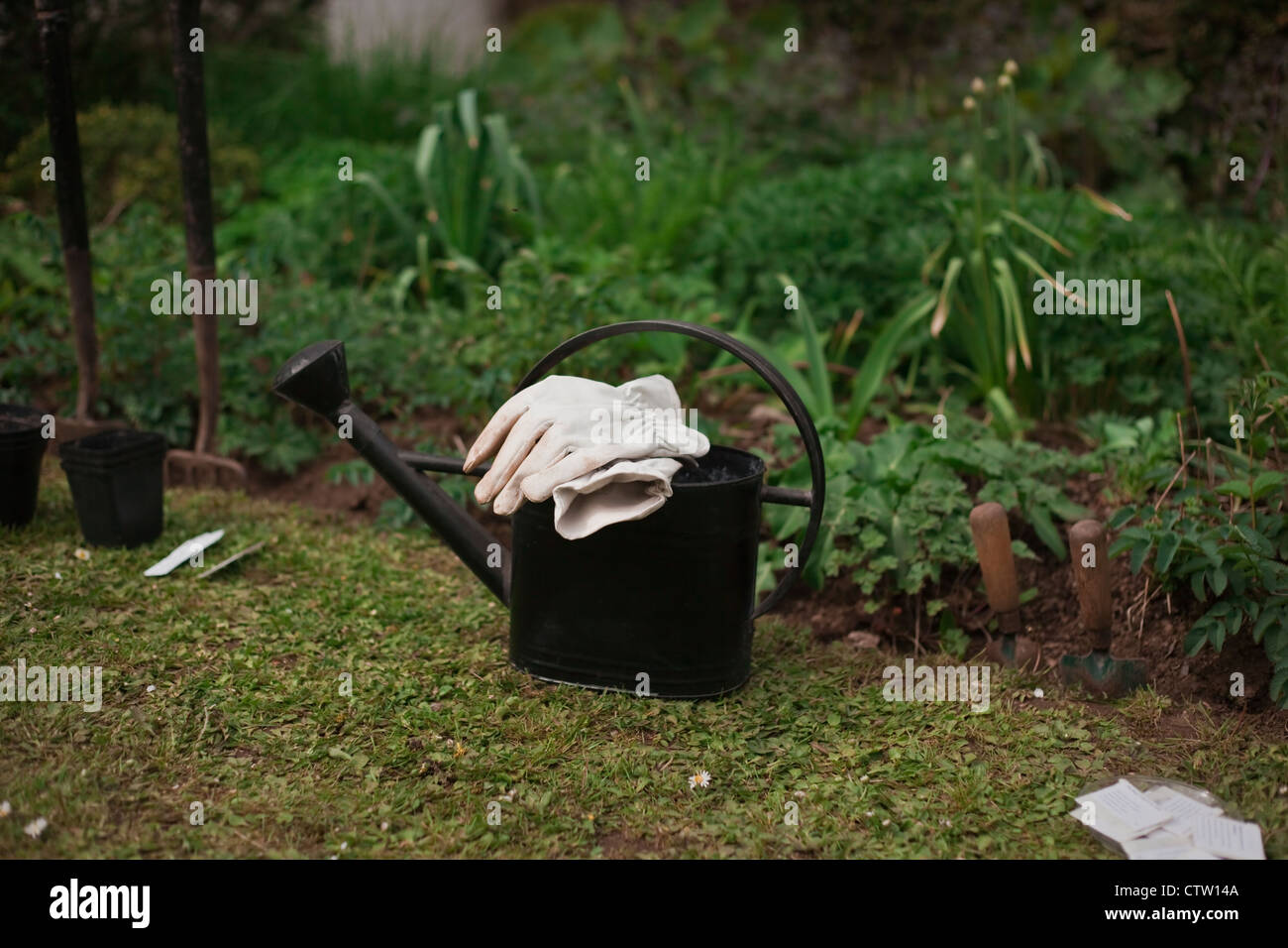 Preparing mixed herbaceous border for annual seed sowing, April, UK - Stock Image