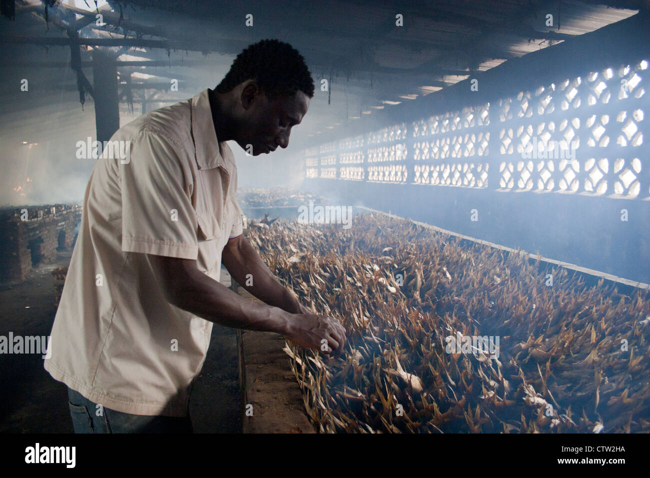 Man arranging fish in smokehouse, The Gambia, Africa. - Stock Image