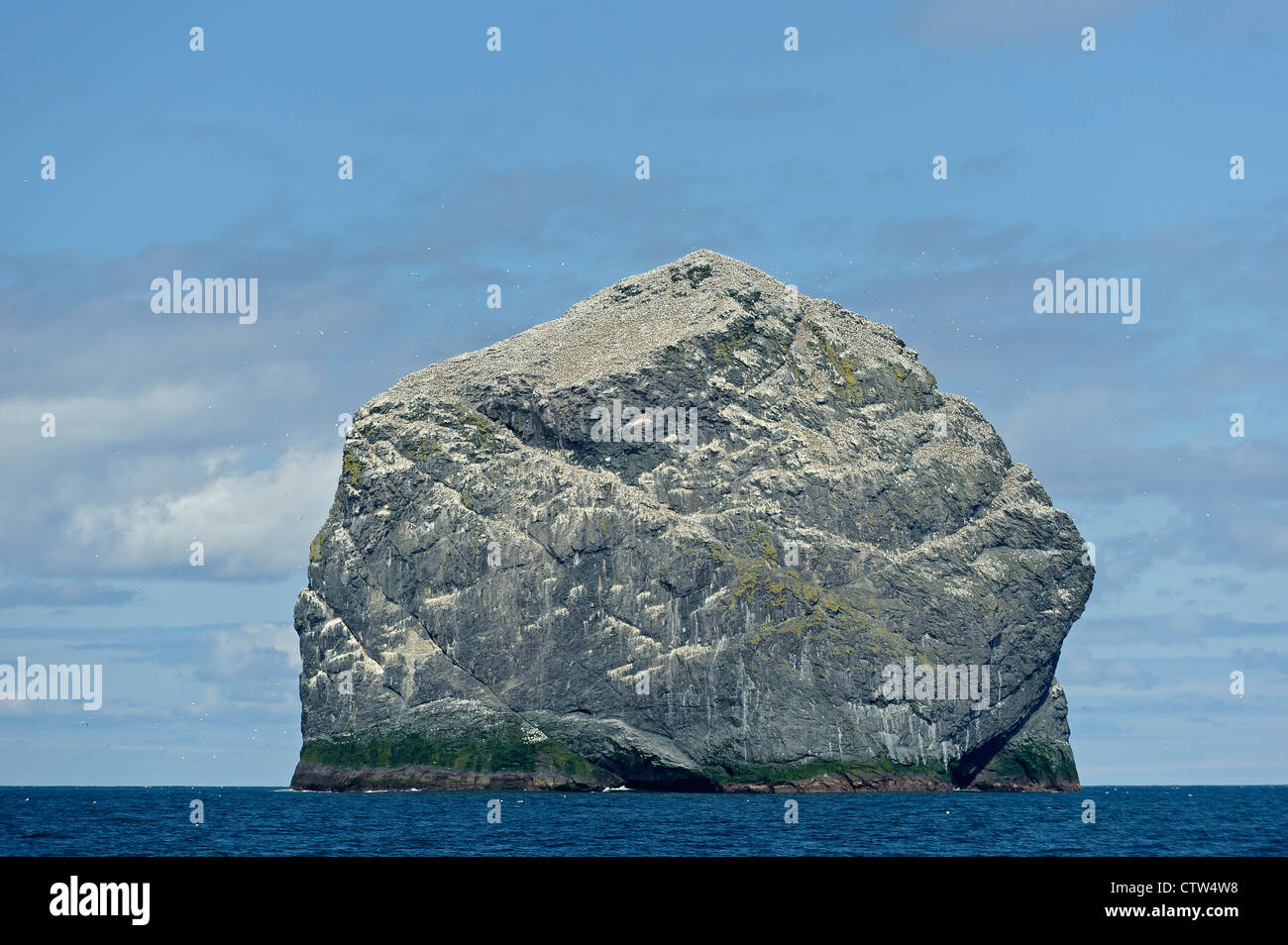 Stac Lee in the Saint KIlda archipelago, with nesting colony of northern gannets (Morus bassanus). Scotland. June. - Stock Image