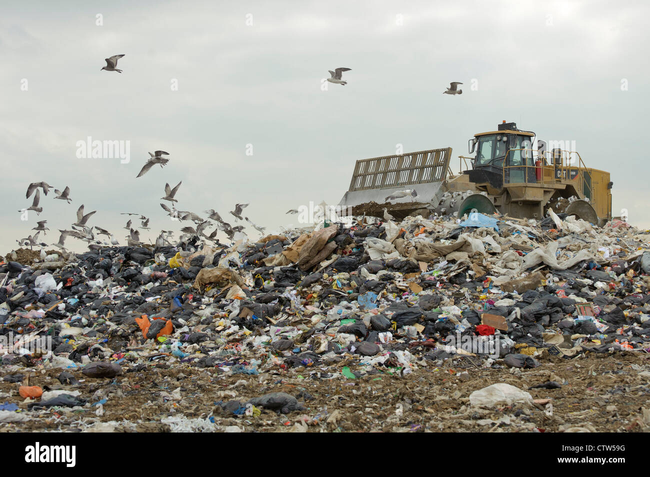 Gulls scavenging at Pitsea landfill site in Essex. August 2011. - Stock Image
