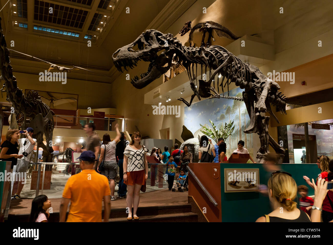 T rex exhibit - Natural History Museum, Washington, DC - Stock Image