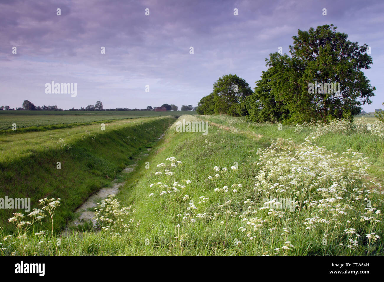 Drainage ditches and farmland of the Cambridgeshire Fens, near Chatteris, England, UK - Stock Image