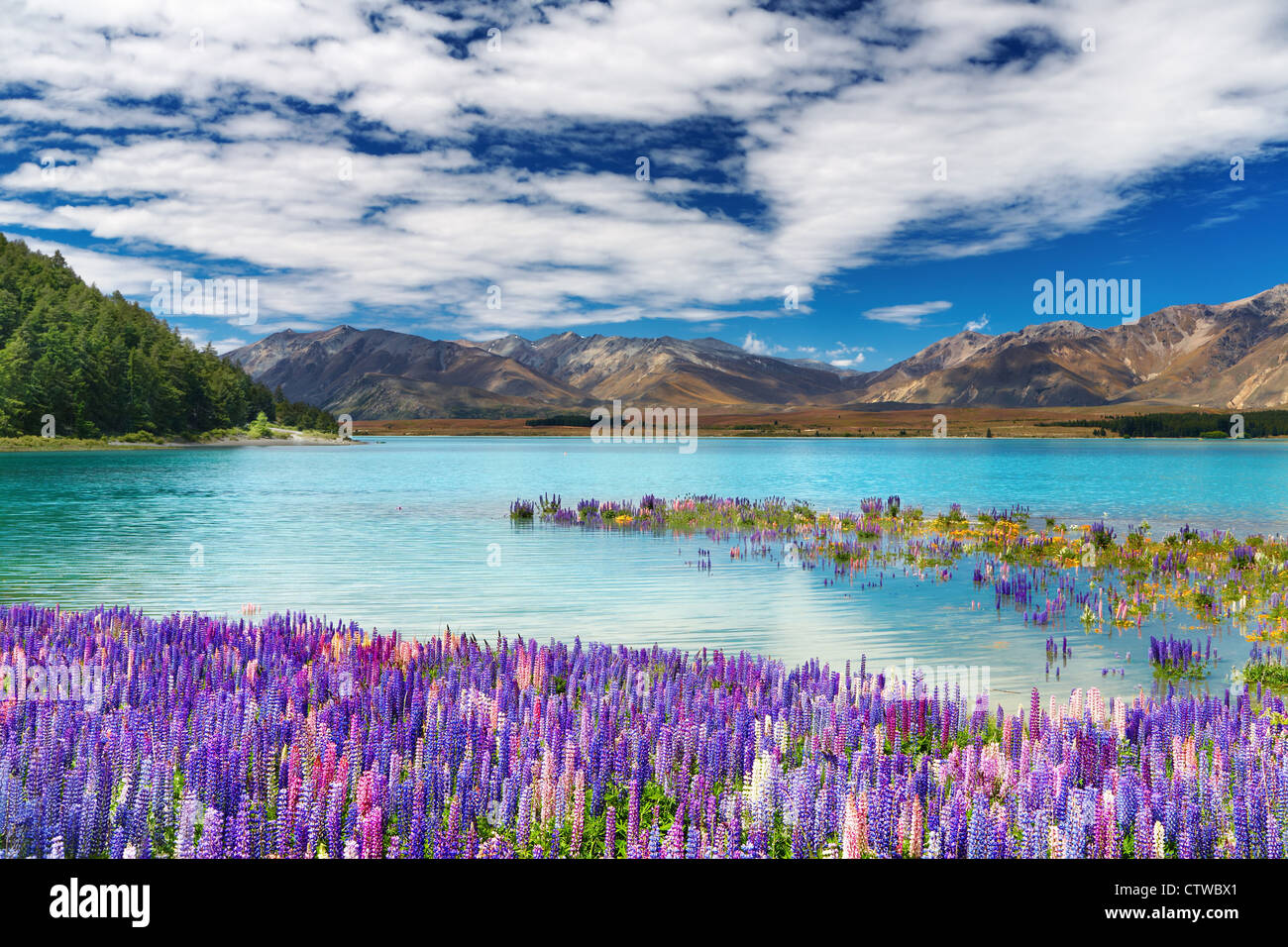 Lake Tekapo, South Island, New Zealand - Stock Image