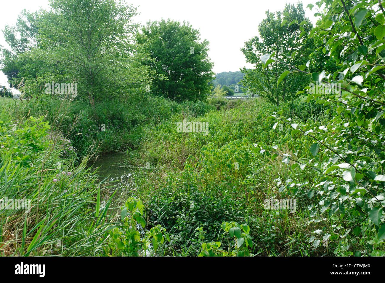 RIPARIAN BUFFER GROWTH AND STREAM SIDE FENCING ALONG BANKS OF SWARR RUN LANCASTER, PENNSYLVANIA - Stock Image