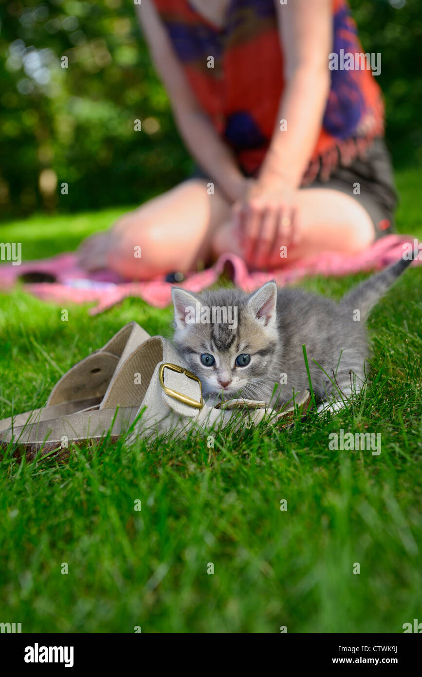 Cautious female kitten outdoors attacking shoes on the lawn with woman watching Toronto - Stock Image