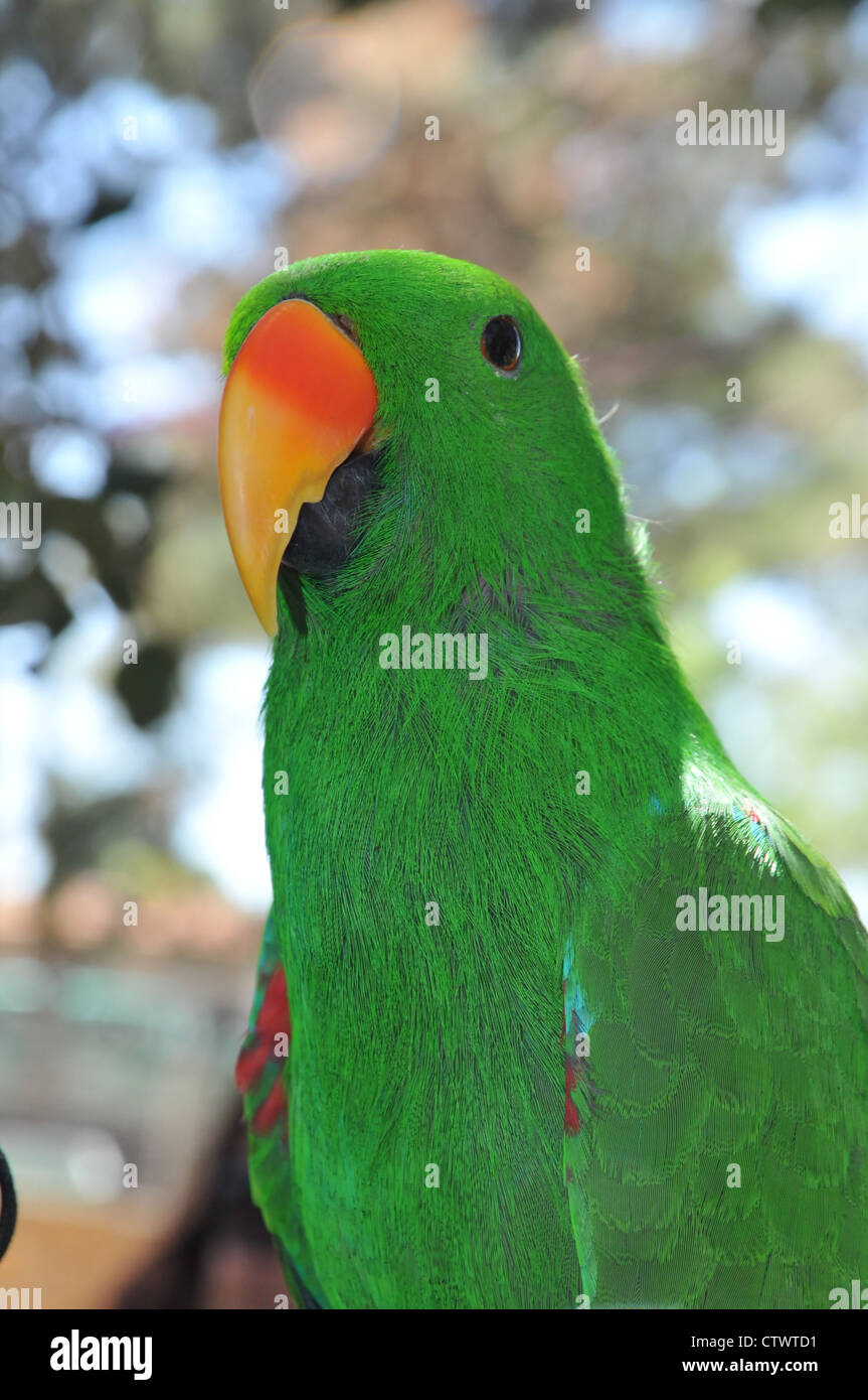 parrot at a petting zoo - Stock Image