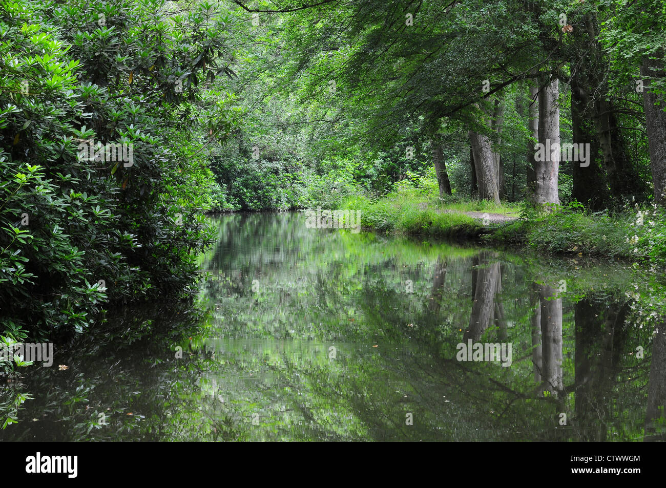 A view of the Basingstoke canal Hampshire UK - Stock Image