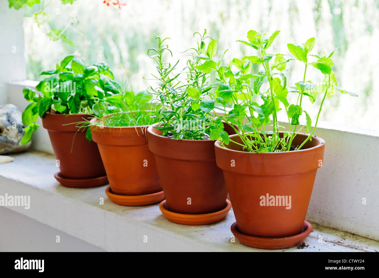 Pots with fresh green herbs on balcony - Stock Image