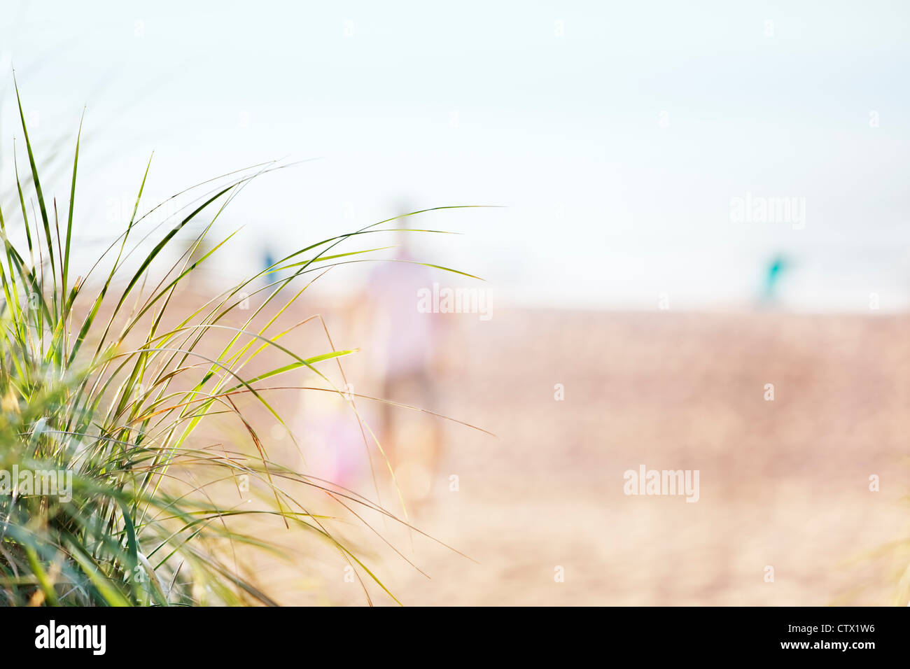 Dune grasses overlooking the beach and morning walkers - Stock Image