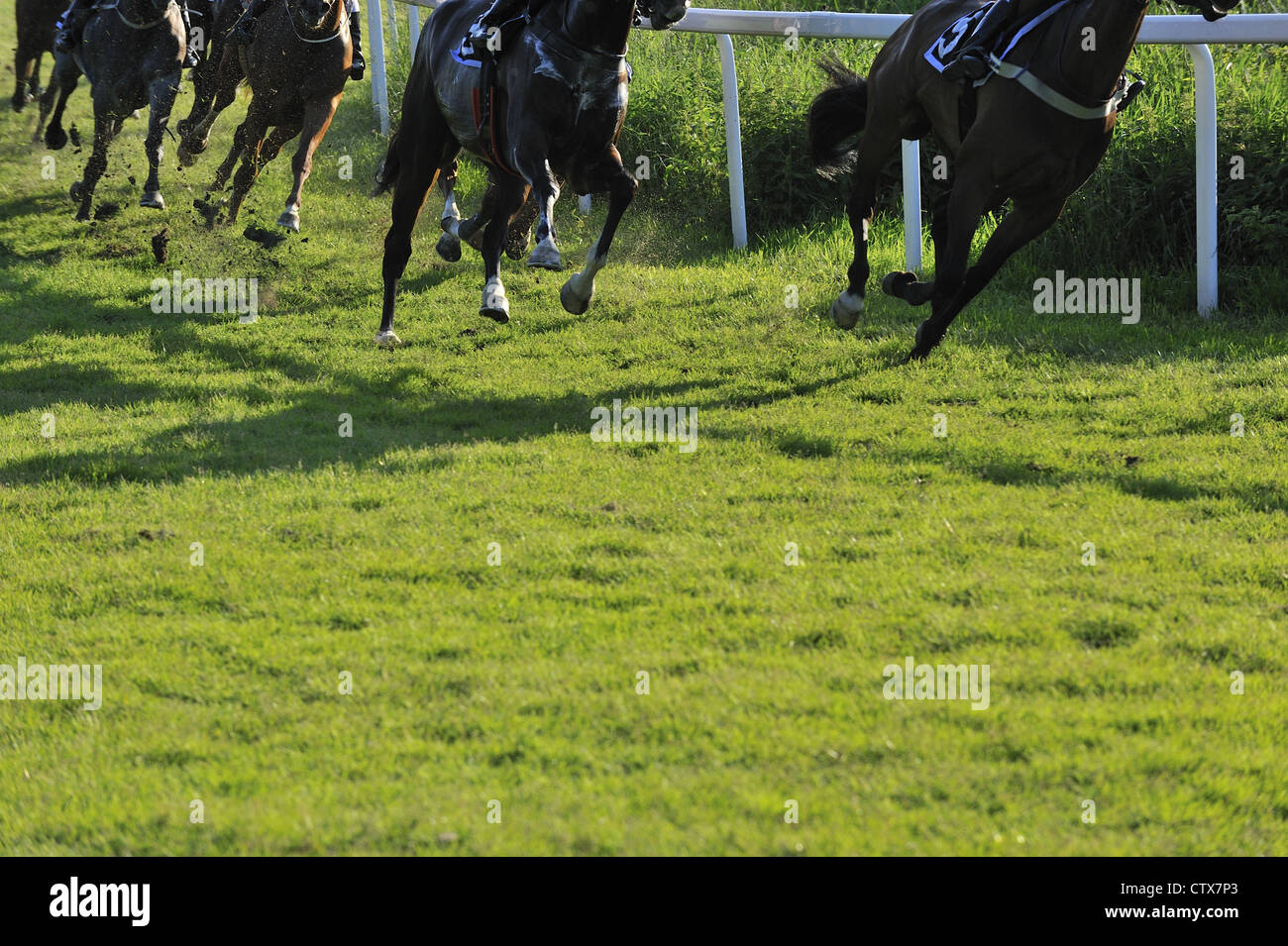 Horse race showing only their lower body and legs - Stock Image