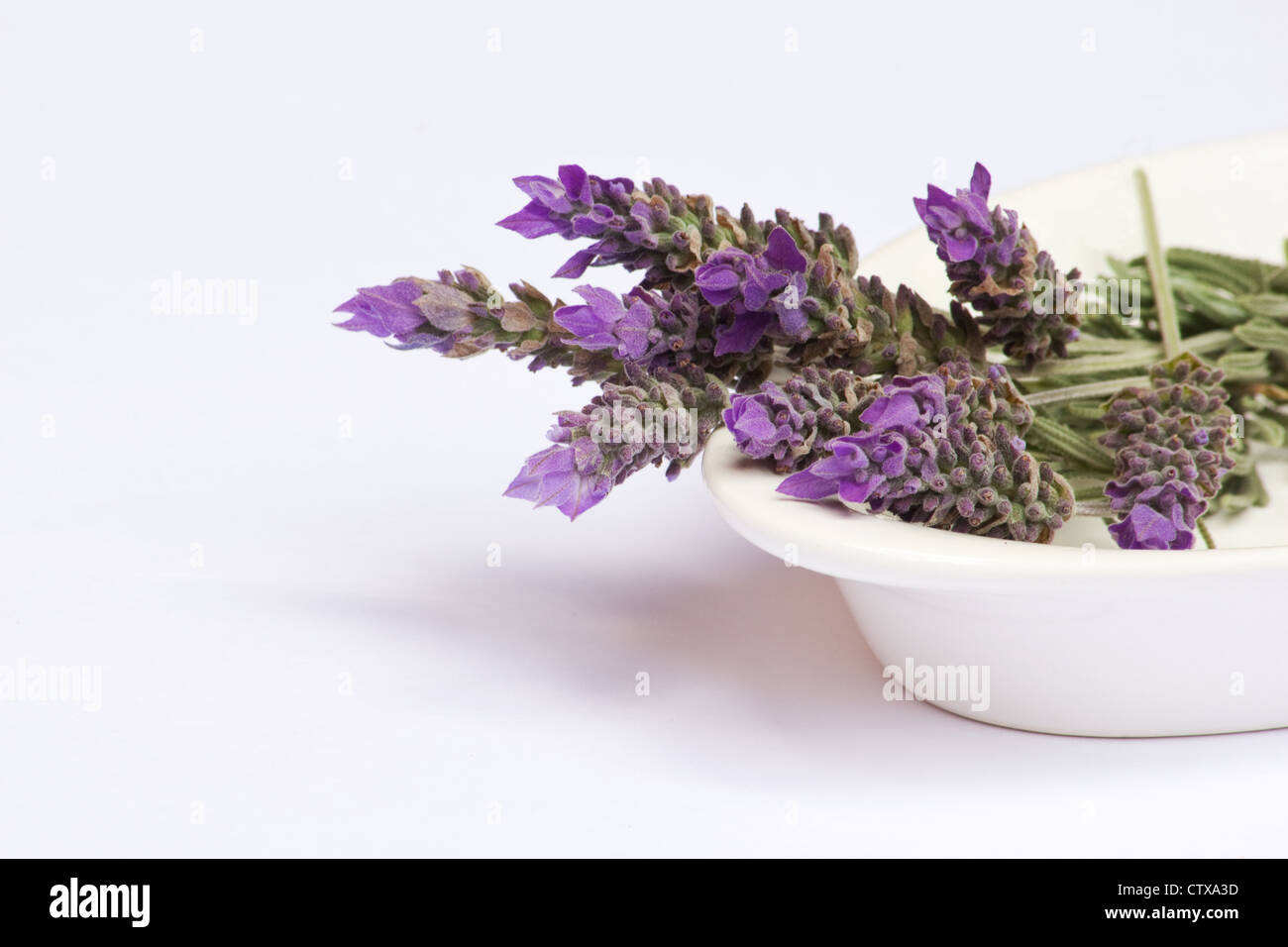 Lavender flowers in a white bowl on white background - Stock Image