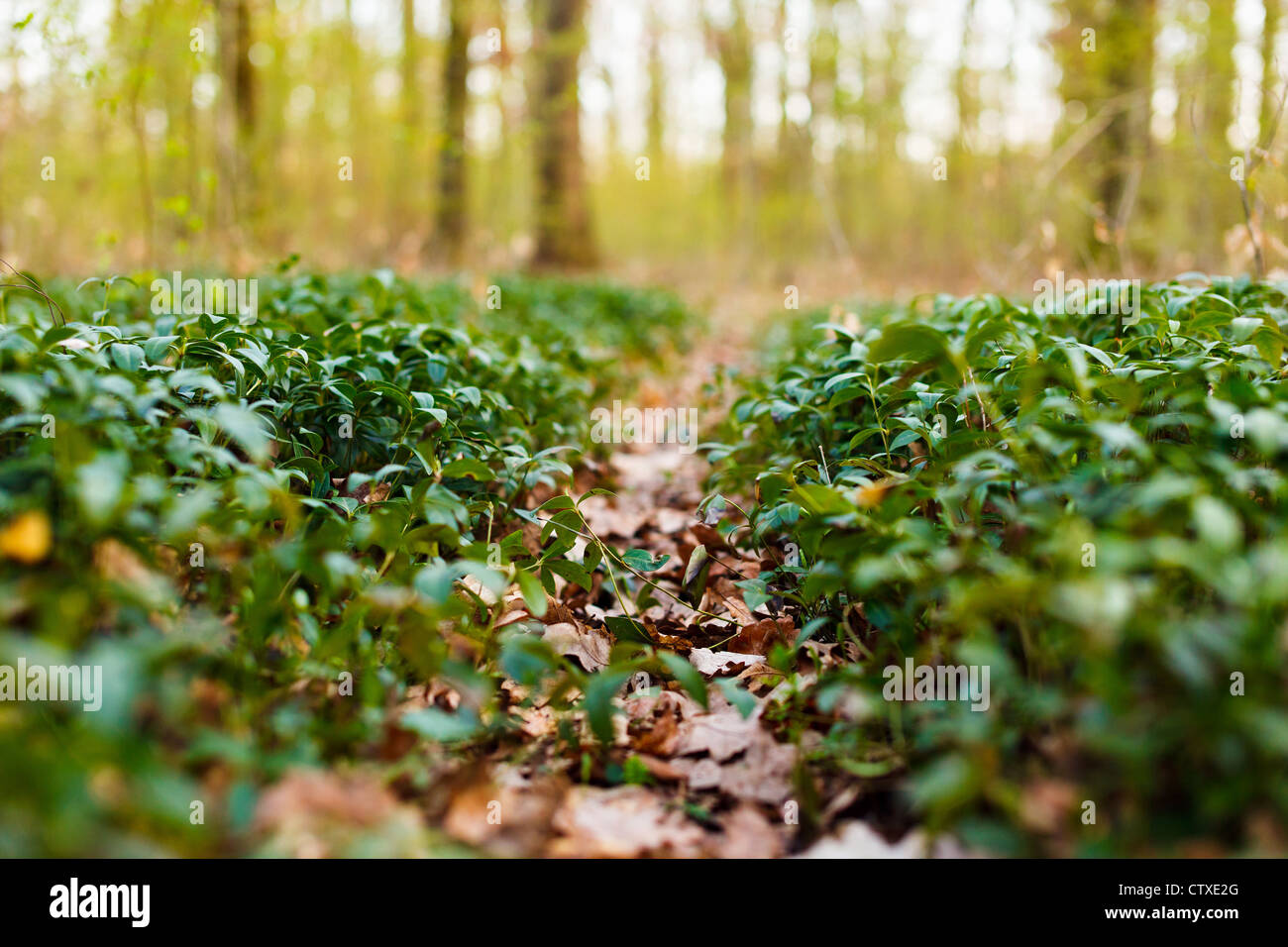 Trail in the forest - Stock Image