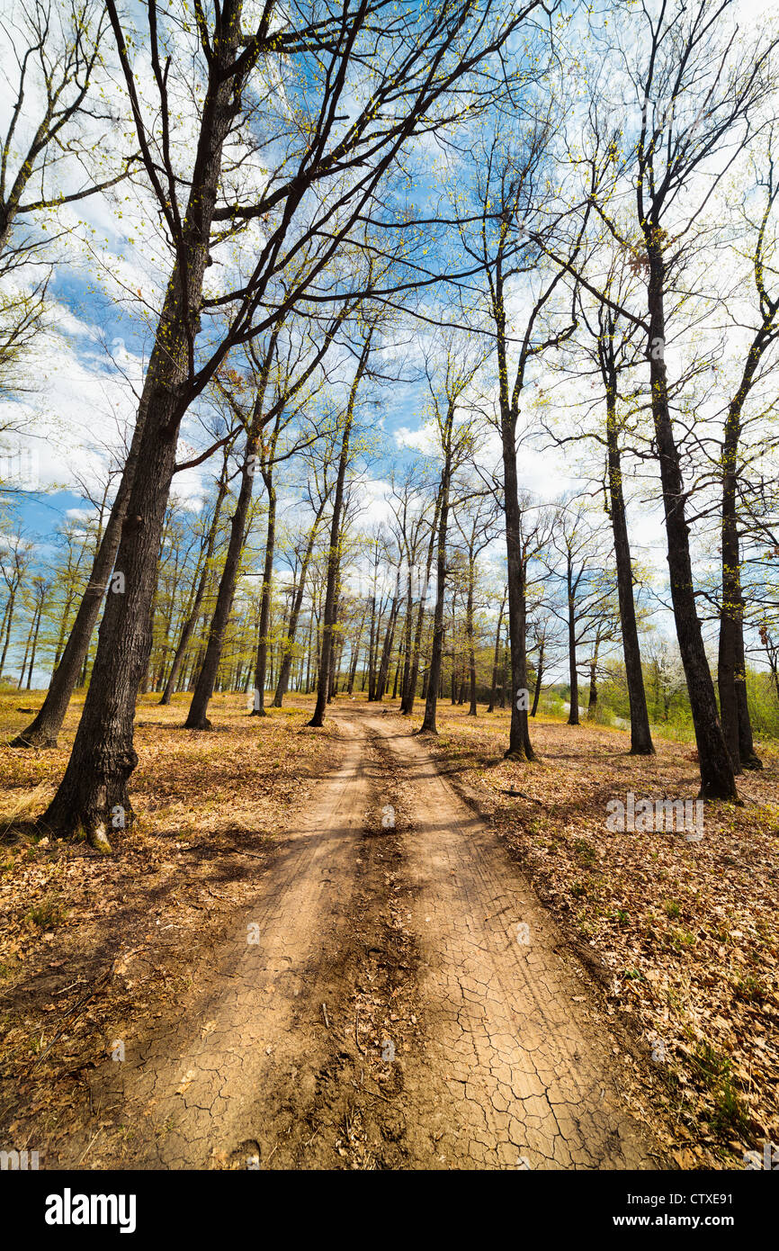 Landscape with dirt road in a beech forest with blue sky and clouds - Stock Image