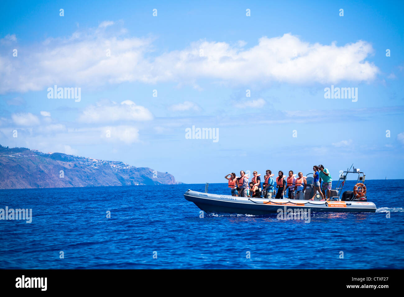 Whale watching Madeira, Portugal - Stock Image