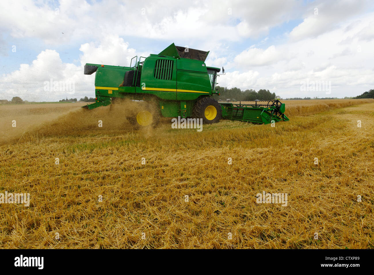 Barley corn harvest with reaper, August. - Stock Image