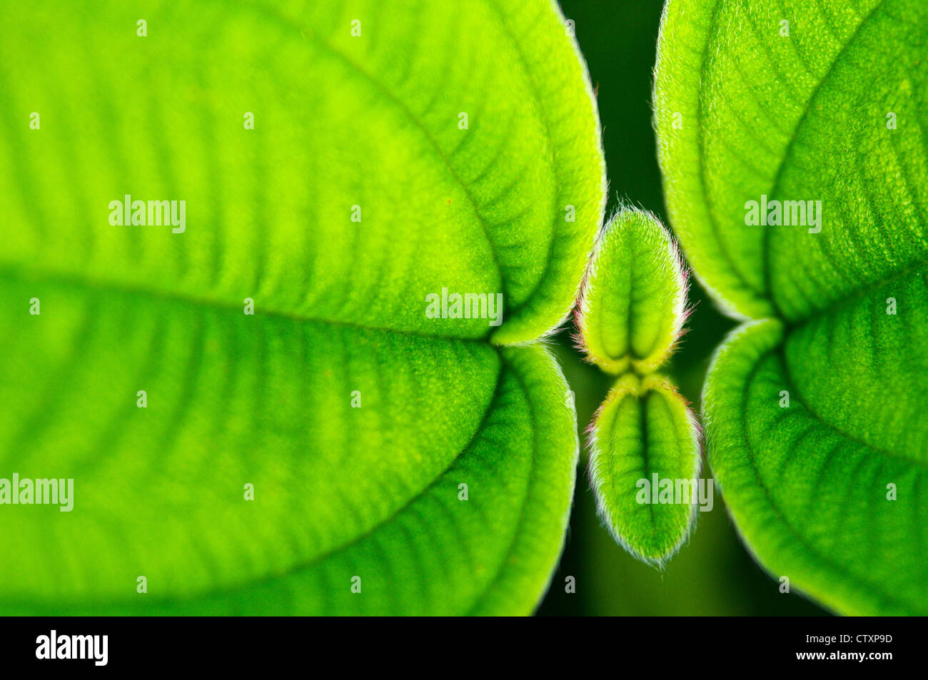 Stunning green leaf  macro shot showing the texture and vibrant colour during a war and sunny day. Stock Photo
