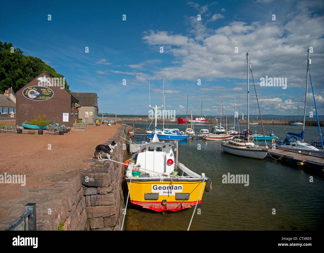 Avoch harbour on the Moray Firth offers dolphin watching boat trips.  SCO 8273 - Stock Image