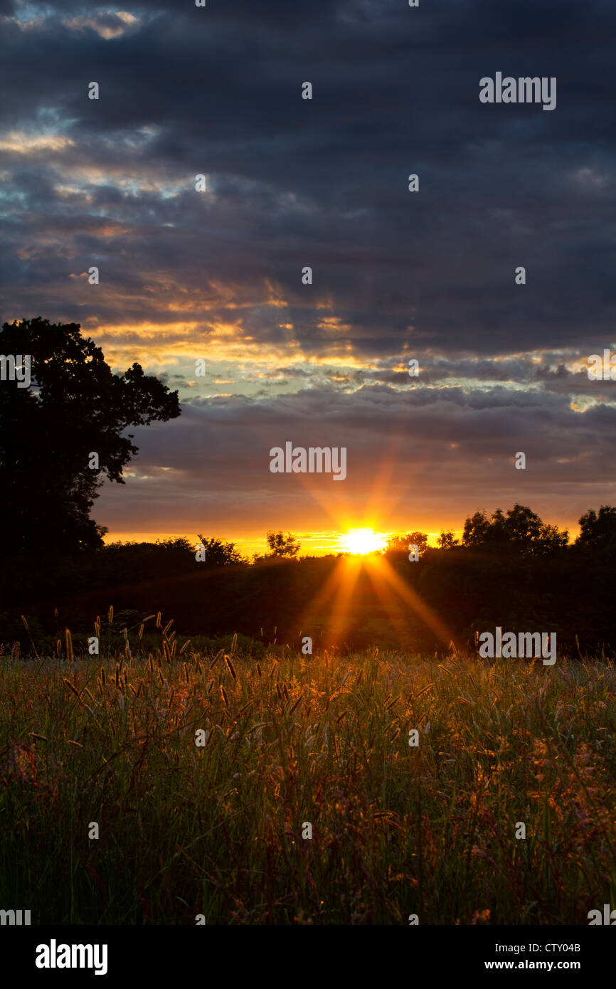 Sunset over tall grass in the English countryside - Stock Image