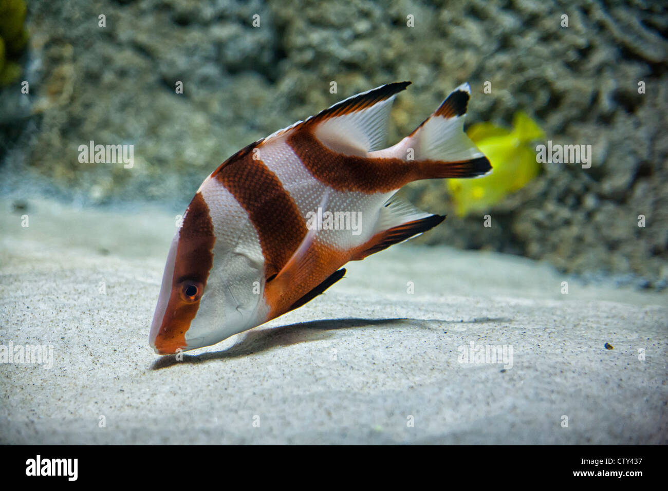 Sea Life Kansas City Aquarium - Stock Image