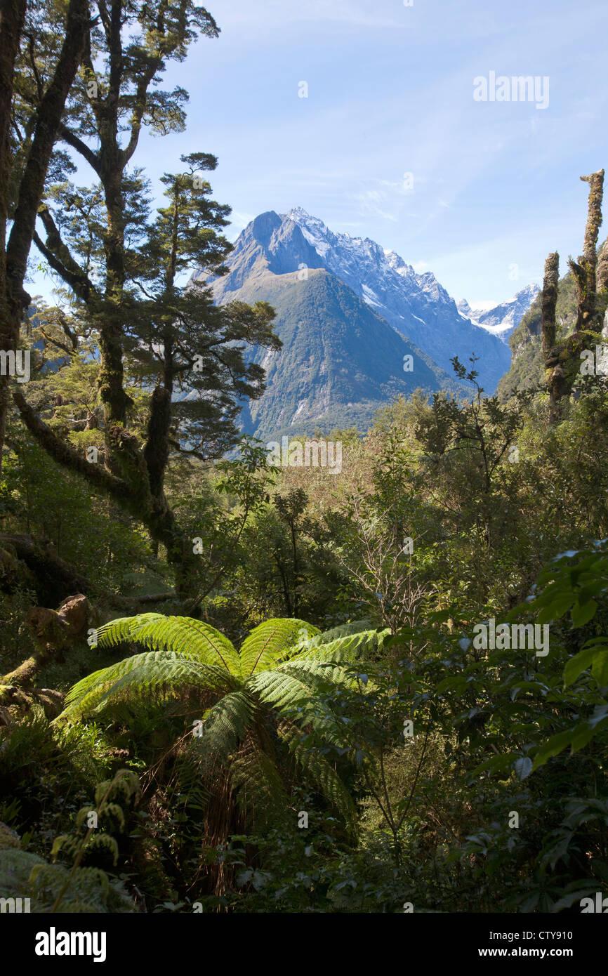 fjordland Newzealand - Stock Image