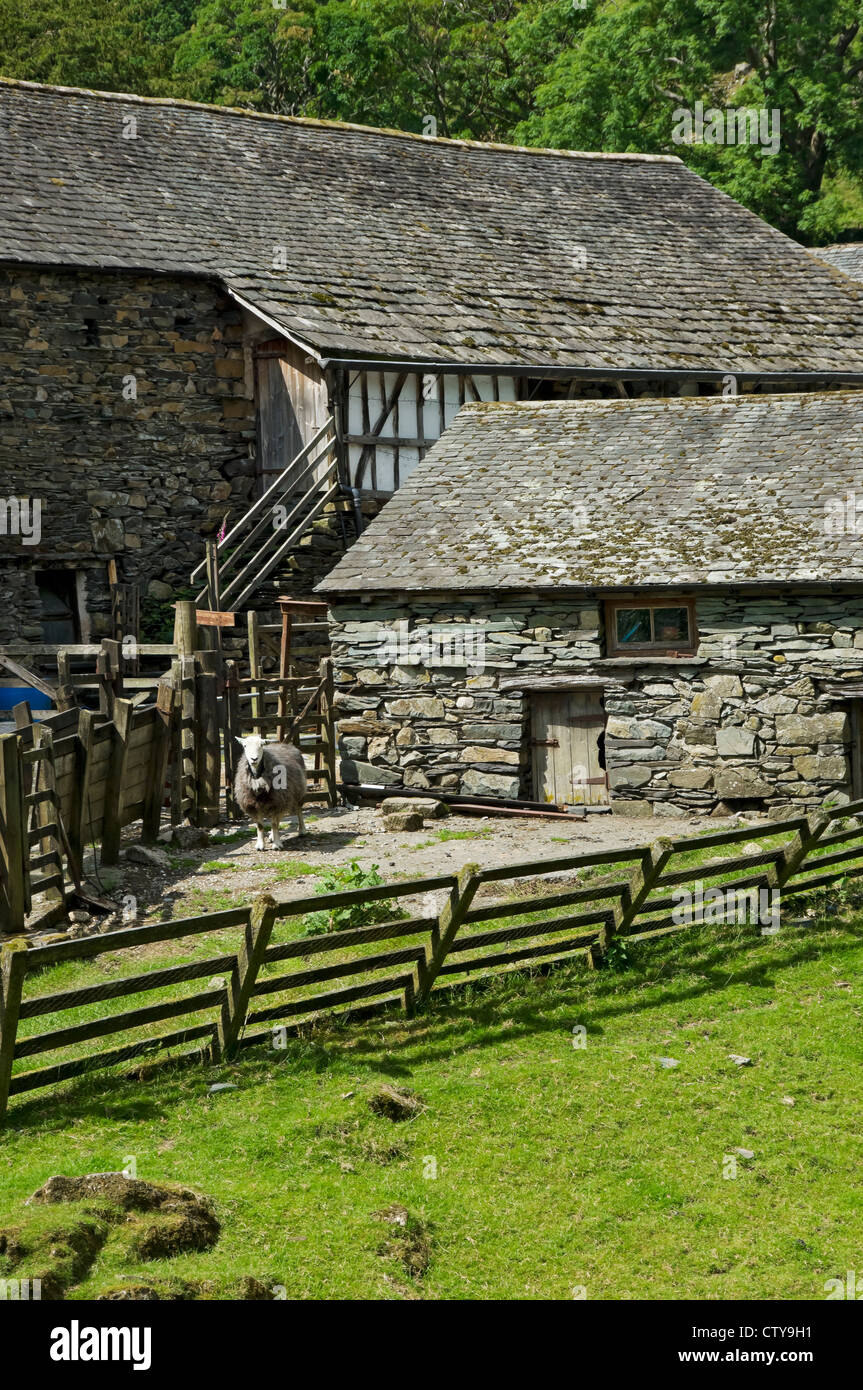 Sheep in a pen at Yew Tree Farm (once owned by Beatrix Potter) Coniston Cumbria England UK United Kingdom GB Great - Stock Image
