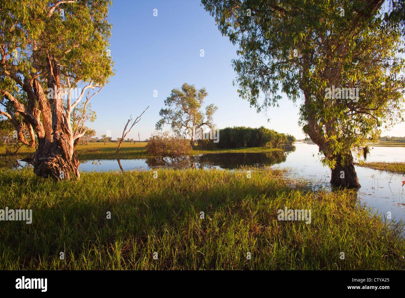 yellow water billabong, Australia - Stock Image