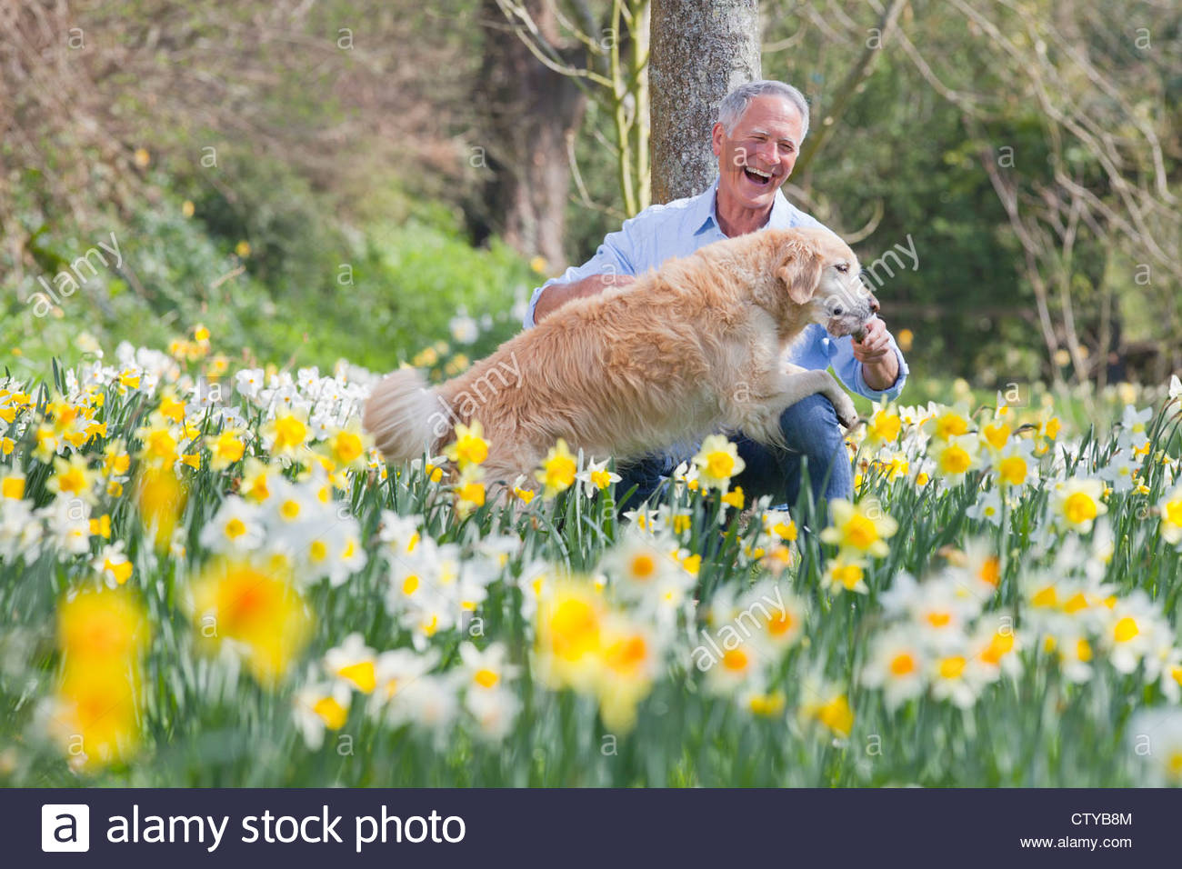 Happy man playing with dog in sunny daffodil field - Stock Image