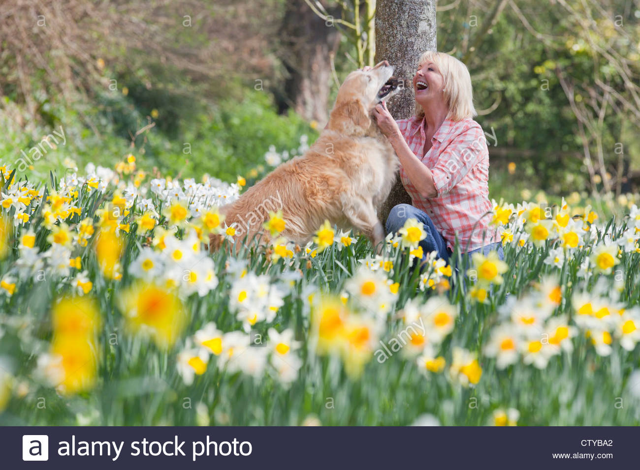Happy woman playing with dog in sunny daffodil field - Stock Image