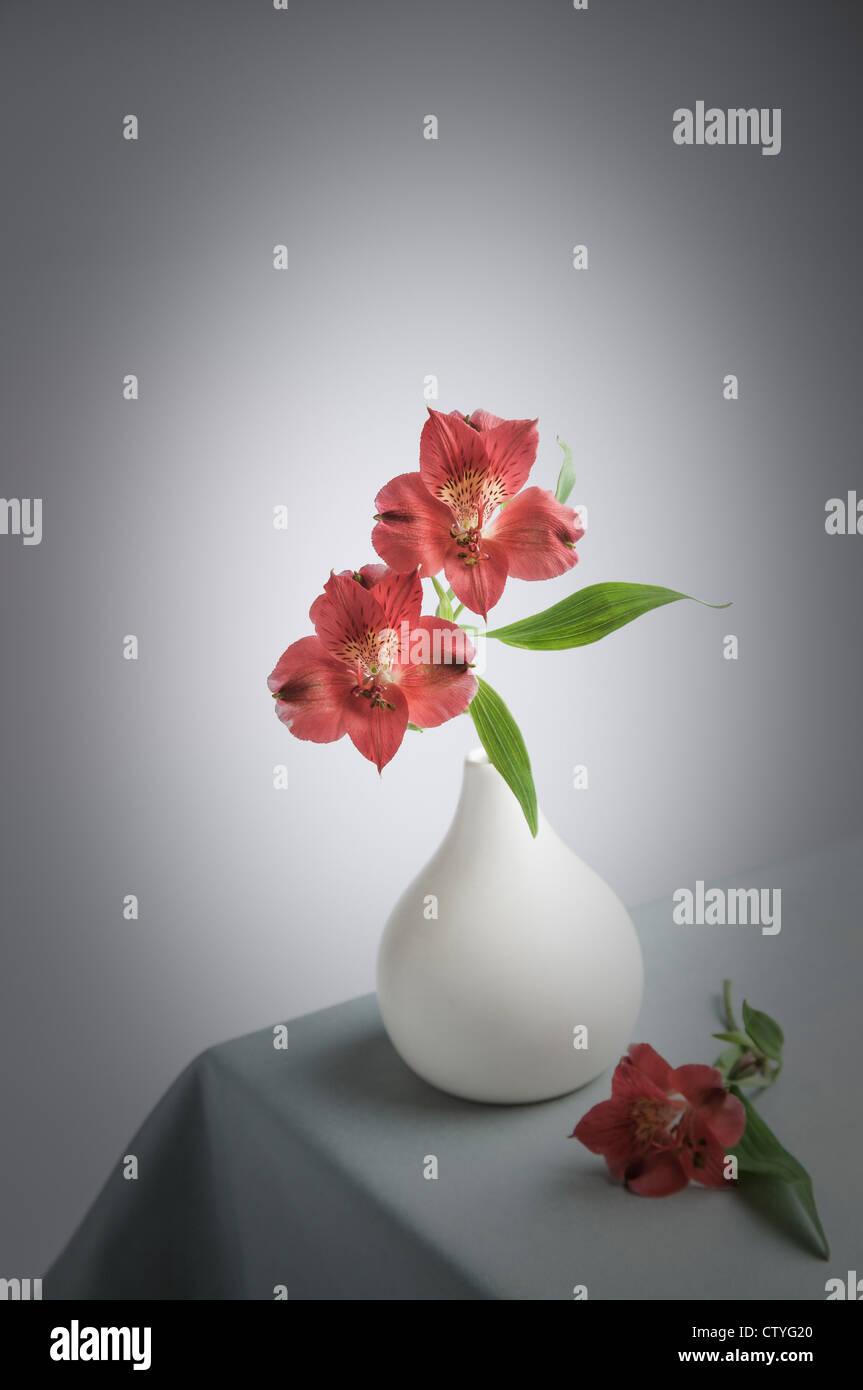 two Alstroemerias in white Vase - Stock Image