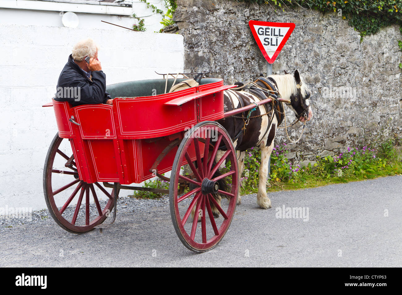 harvey in pony and trap. horse and cart - Stock Image