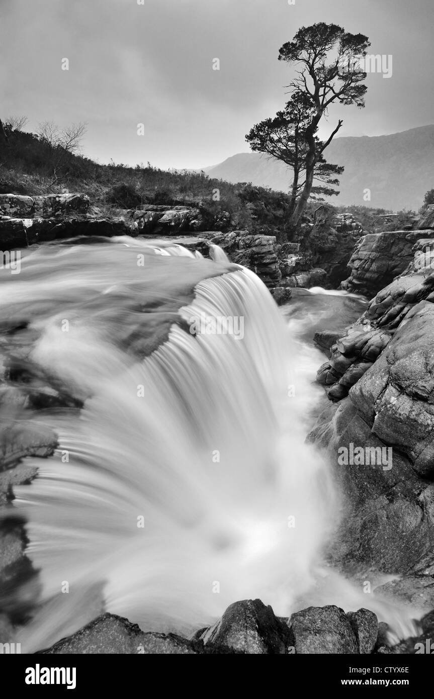 Black and white image of lone Scots Pine tree and waterfall on the Abhainn an Fhasaig, Torridon, Scottish Highlands - Stock Image
