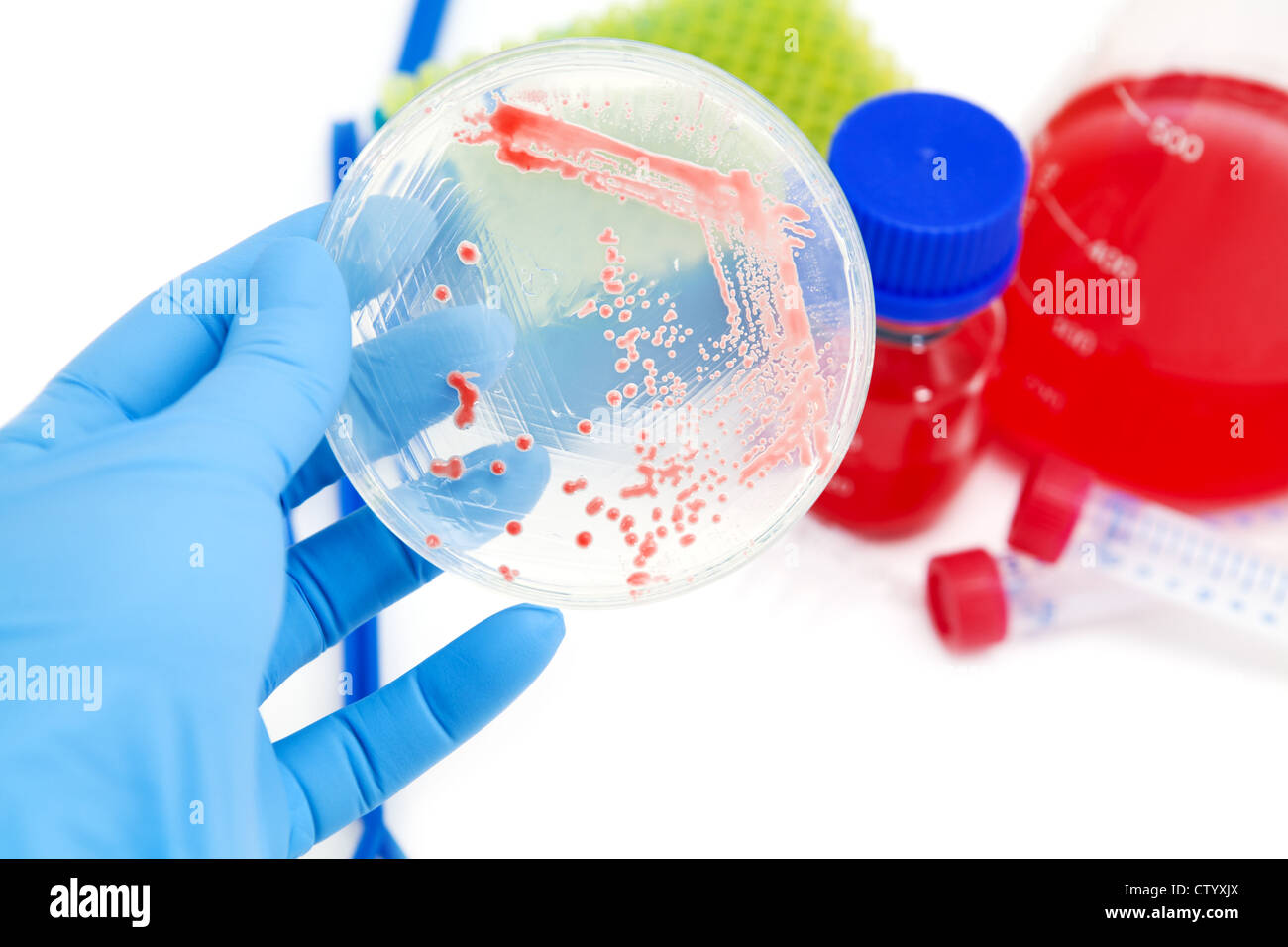 microorganisms mutants on agar plate in laboratory - Stock Image