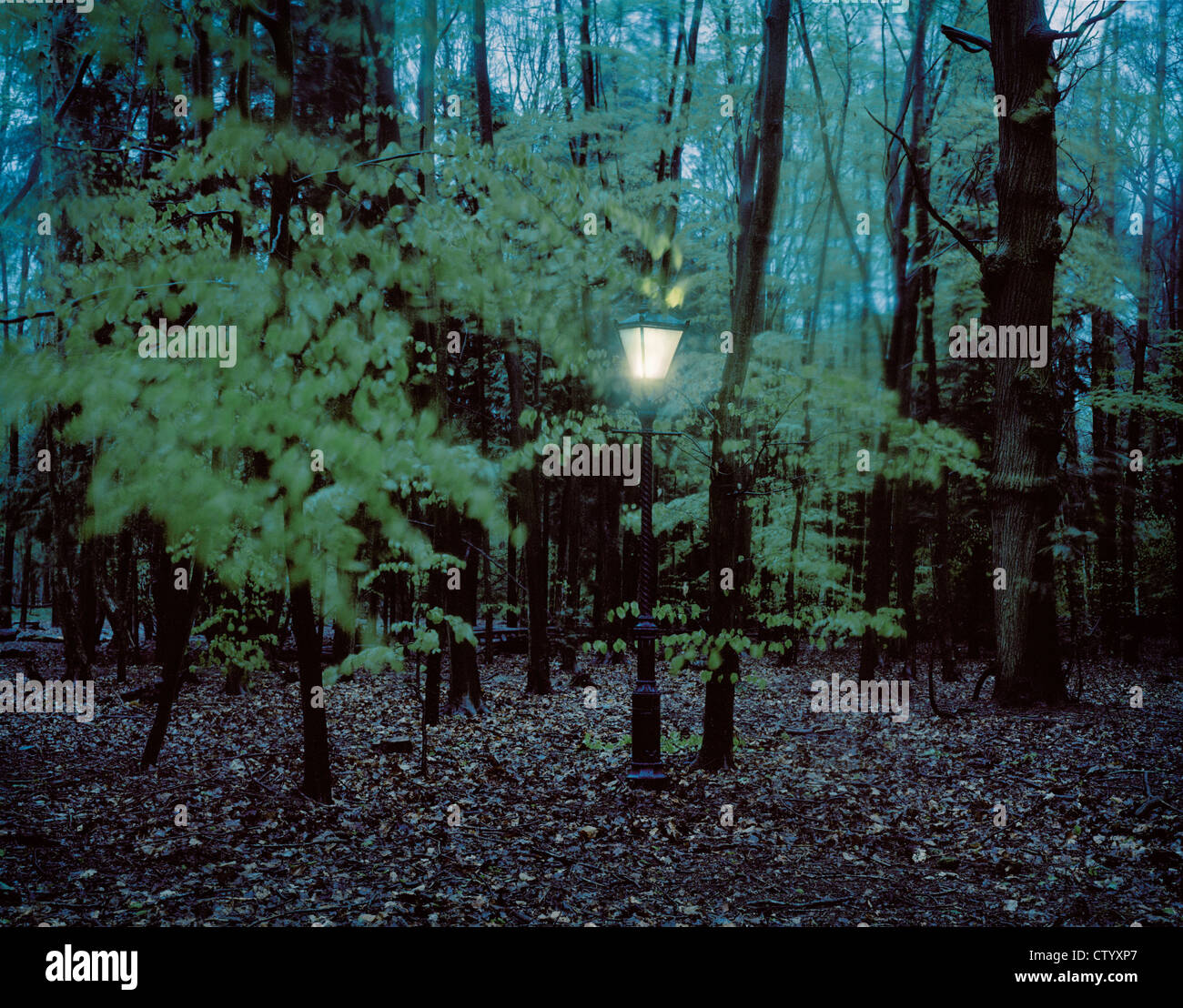 Lantern hanging from trees in forest Stock Photo