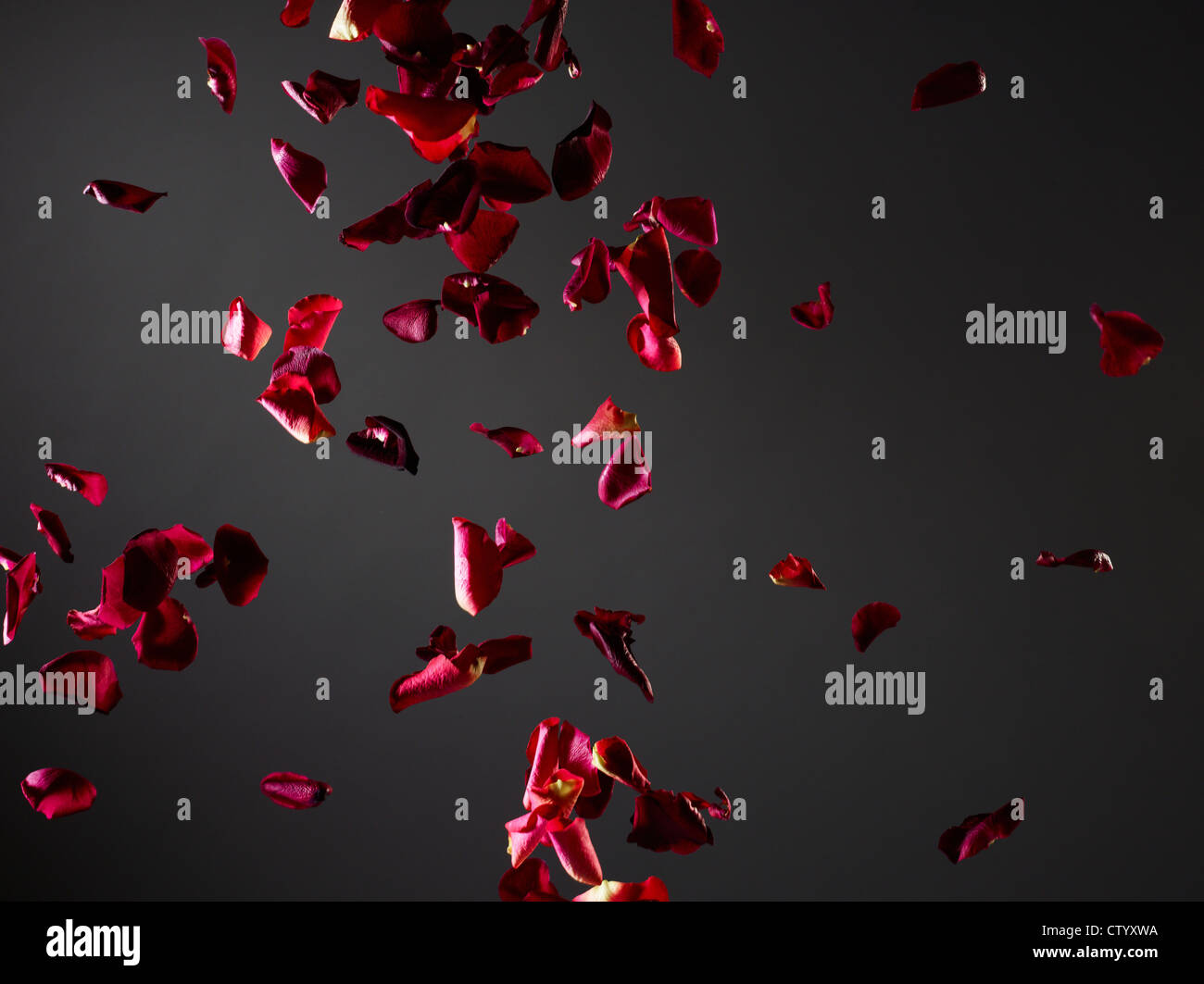 Colorful flower petals flying in air - Stock Image